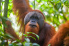 Sights & Sounds of the Borneo Jungle with Norad Travel